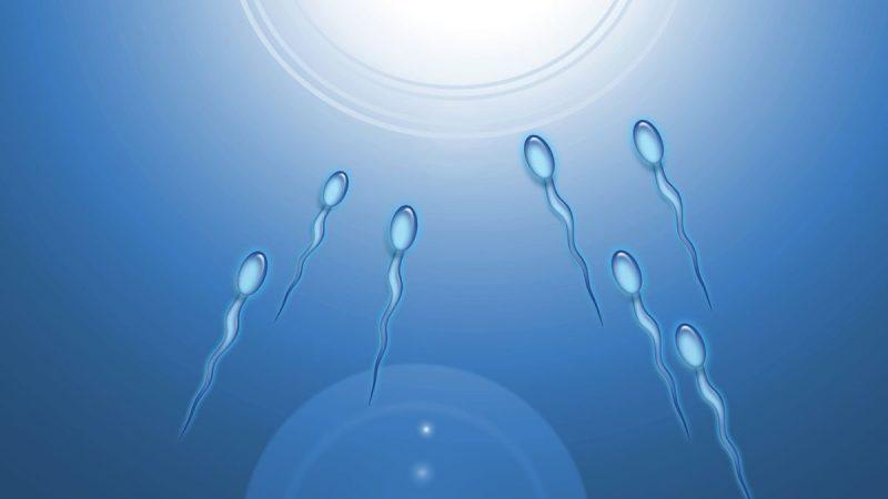 5 cách tăng khả năng di chuyển của tinh trùng