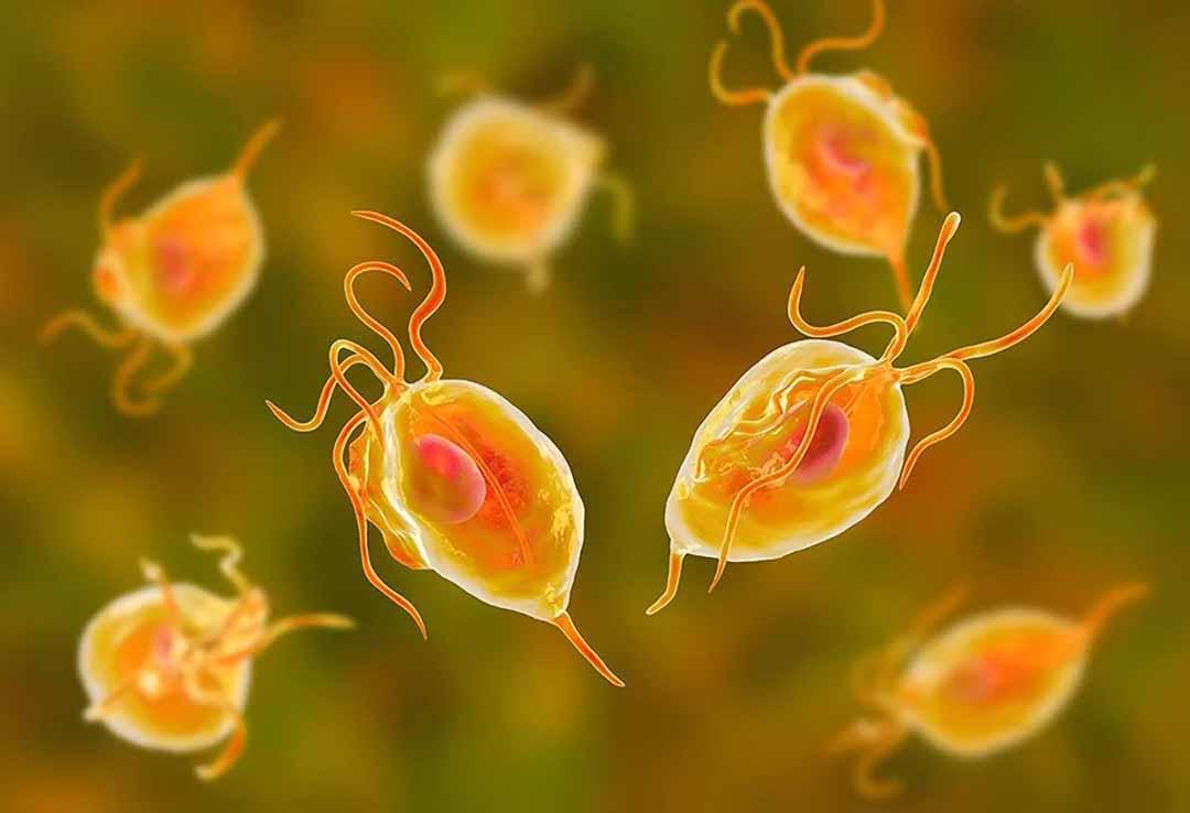 Vi khuẩn Trichomoniasis