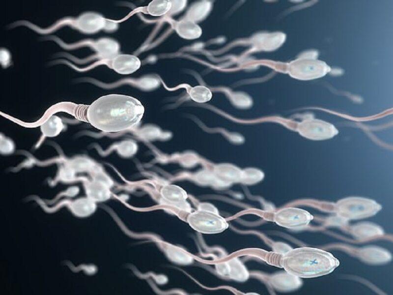 """Mật độ tinh trùng thấp sẽ làm giảm khả năng """"tinh binh"""" gặp được trứng"""